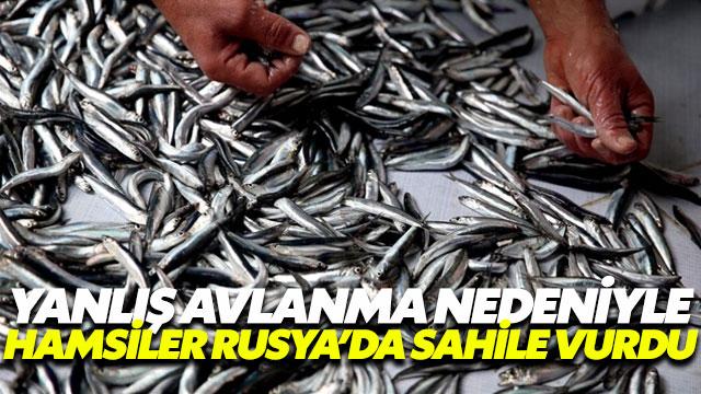 Trabzonlu balıkçılar isyanda