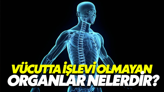 Vücutta İşlevi Olmayan Organlar Nelerdir?
