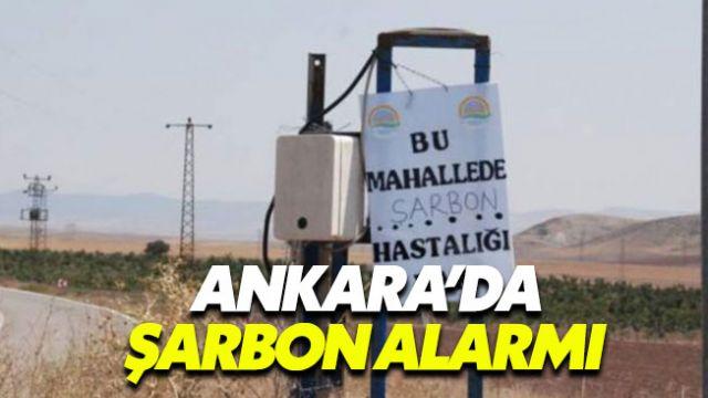 Ankara'da verilen şarbon alarmı endişe yarattı