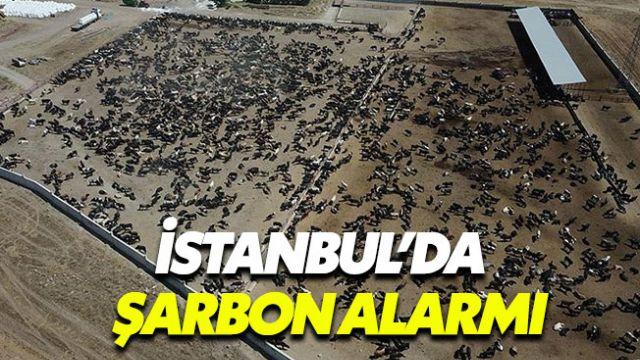Orman Bakanı'ndan şarbon açıklaması: 3500 hayvan aşılacak