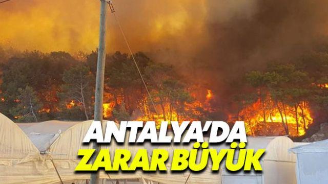 Antalya'daki orman yangınında hasar büyük