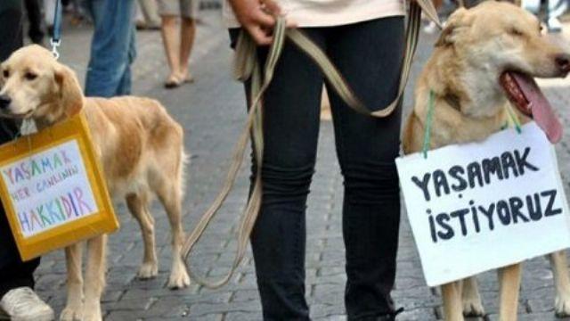CHP 'Hayvan Hakları' teklifini yineledi