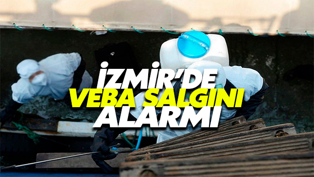 İzmir'de Veba Salgını Alarmı!