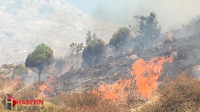 Marmara Adası'ndaki yangın kontrol altında