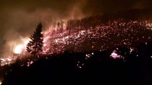 Karadeniz'de orman yangını