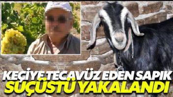 Keçiye tecavüz ederken yakalandı