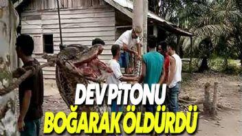 Endonezya'da bir adam 23 metrelik piton yılanı öldürdü