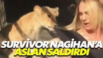 Survivor yarışmacısı aslan saldırısına uğradı