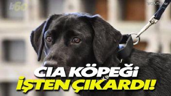 CIA köpeği işten çıkardı