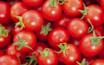 Rusya'ya domates satışında yeni gelişme