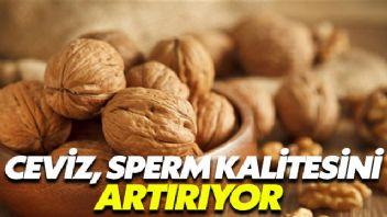 Ceviz sperm kalitesini artırıyor