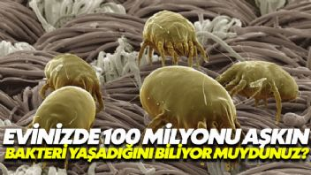 Evinizde 7 bin farklı türde 100 milyonu aşkın bakteri yaşıyor