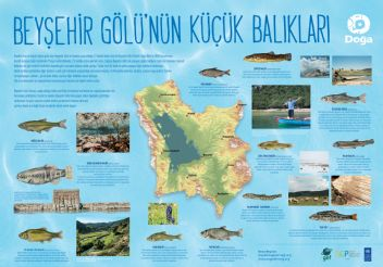 On beş balık türü dünyada yalnızca Konya Havzasında yaşıyor