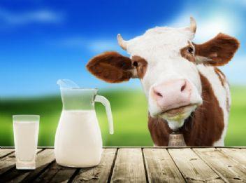 Türkler neden süt içmiyor?