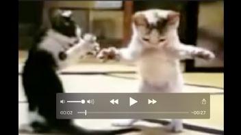 Bu Kediler Çok Komik...