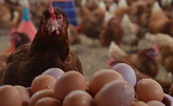 Yumurta üreticileri zorda yumurtaya zam geliyor
