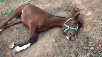 Milyonlarca TL'lik yarış atlarının şüpheli ölümü