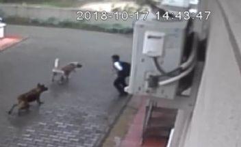 Okul çıkışı köpeklerin saldırdığı çocuğun ailesi belediyeyi suçladı