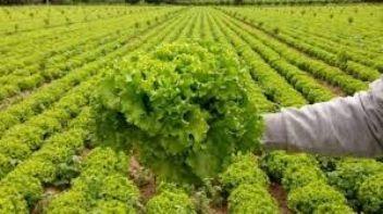 ABD ve Kanada'dan '' marul yemeyin'' uyarısı