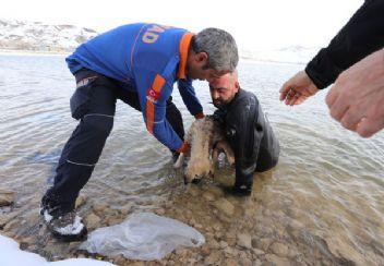 Donmak üzere olan köpeği kurtardı