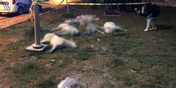Ankara'da sokak köpeklerinin zehirlenmesiyle ilgili 3 kişi gözaltına alındı