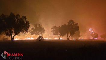 Çanakkale'de korkutan orman yangını